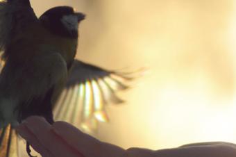 Значение Карт Таро: Девятка Мечей и Доверие к Миру